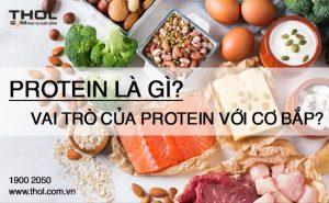 Protein là gì? Vai trò của Protein đối với cơ bắp.