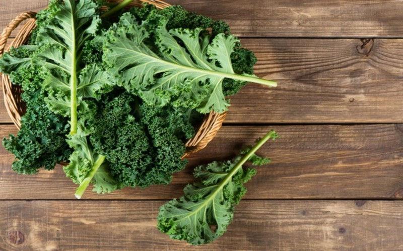Cải xoăn giàu vitamin K, vitamin C, canxi và chất xơ